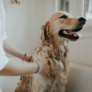 Giving a shower to a dog
